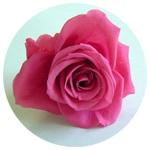 華やかな色をもつホットピンク|花ガーデン(花garden)