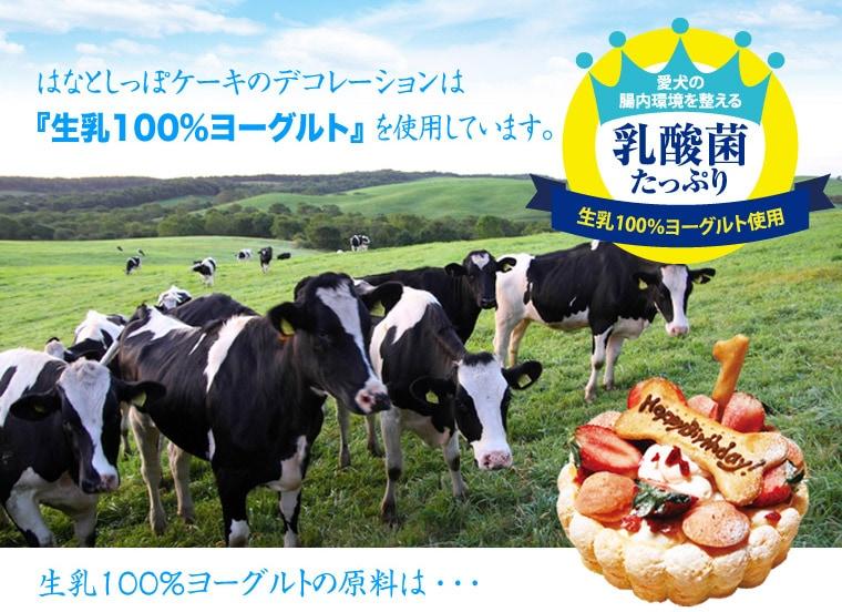 愛犬生乳100%ヨーグルトケーキ