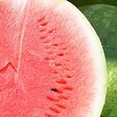 夏のフルーツといえば!スイカ