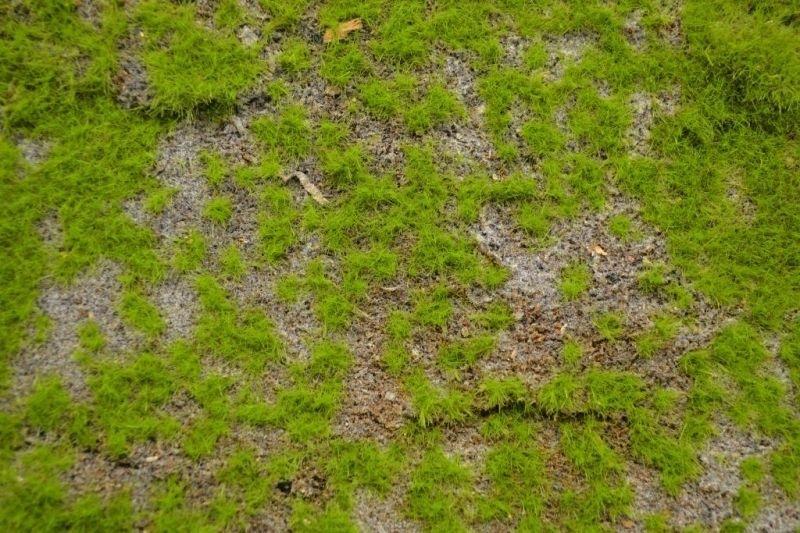 【新製品】MAT01)ランドスケープマット(野草の草原1)