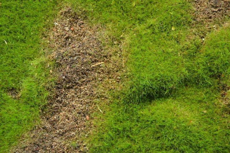 【新製品】MAT04)ランドスケープマット(野草の草原4)