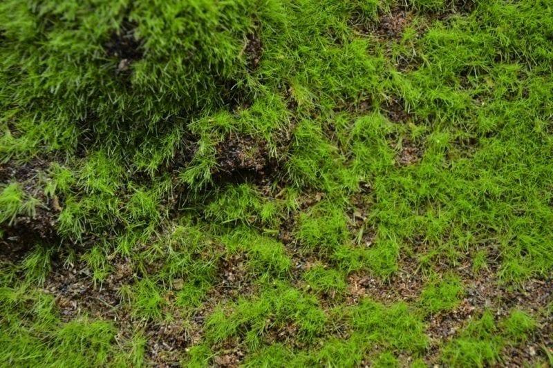 【新製品】MAT07)ランドスケープマット(起伏のある草原1)