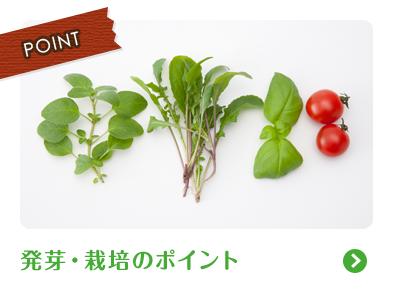 発芽・栽培のポイント
