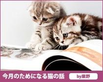 今月のためになる猫の話