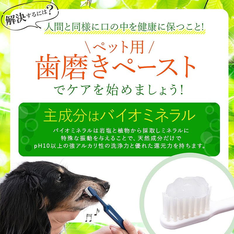visions オリジナル 歯磨きペースト バイオペースト ルース [5gml] Bio Paste Ruth ペーストタイプ