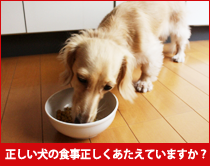 正しい犬の食事正しくあたえてますか?