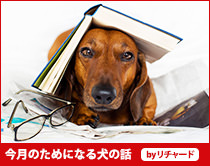今月のためになる犬の話
