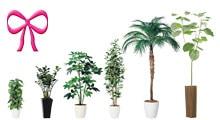 贈り物・ギフトにおすすめの人工観葉植物