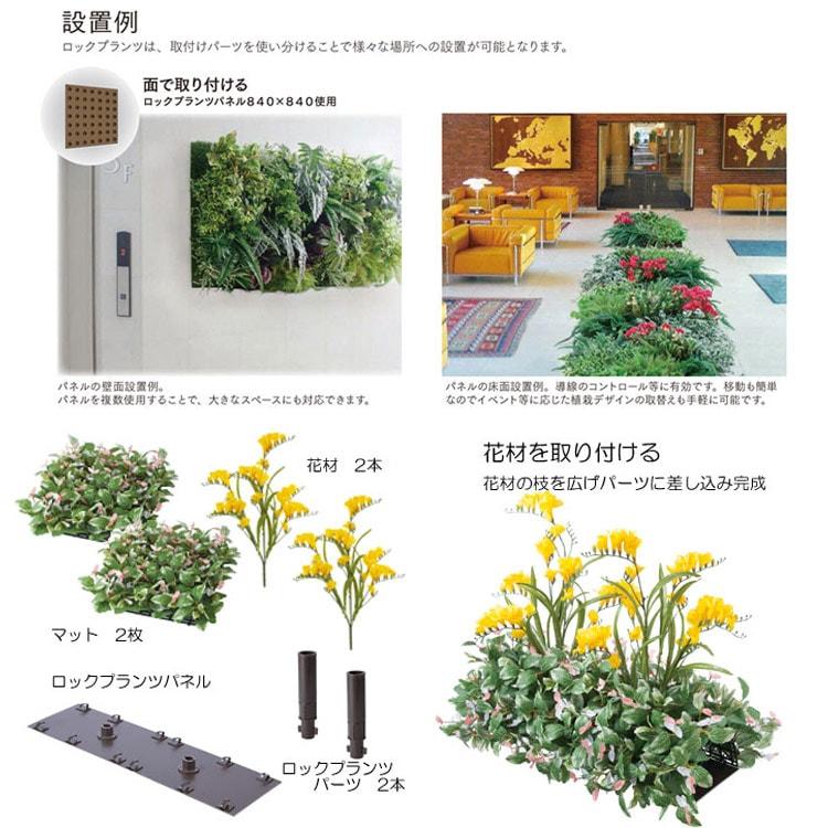 壁面緑化が簡単なロックプランツ