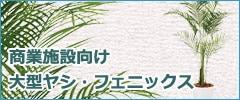 商業施設向けの大型ヤシ・パームツリー