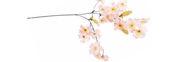 桜スプレイ