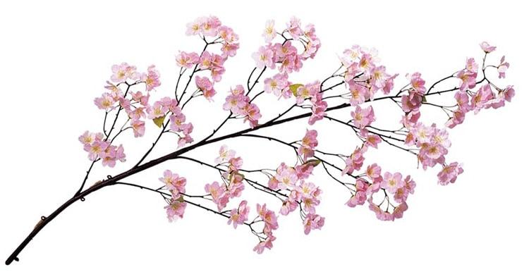 桜大枝(186)