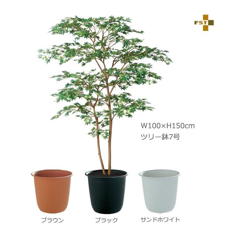 ヤマモミジ株立GREEN150cmFST