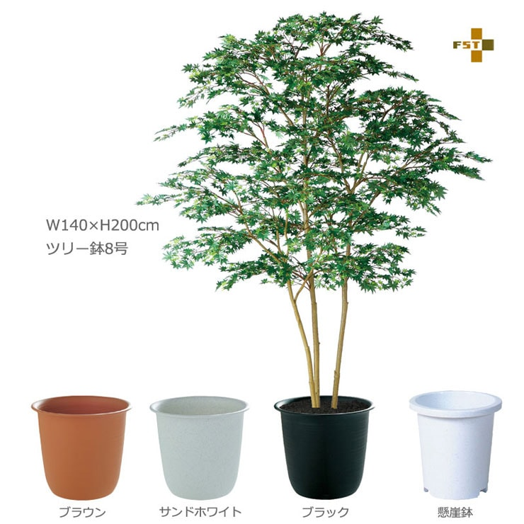 ヤマモミジ株立GREEN FST 200cm