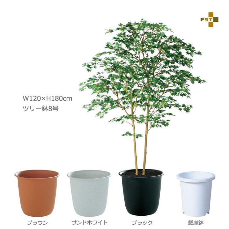 ヤマモミジ株立GREEN FST 180cm