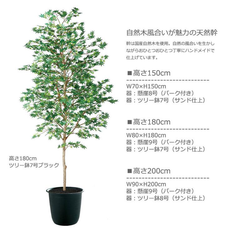 ヤマモミジ緑150・180・200cm