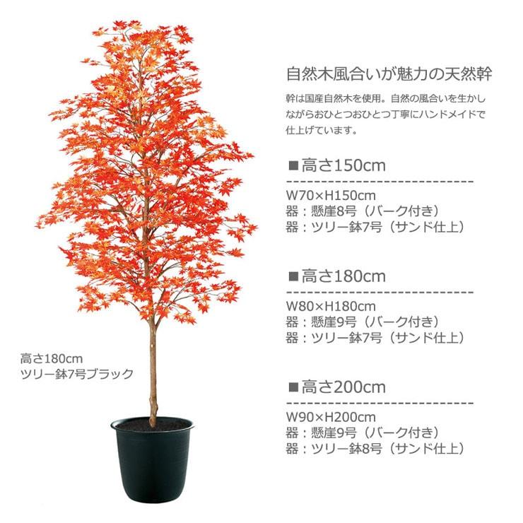 ヤマモミジ紅150・180・200cm