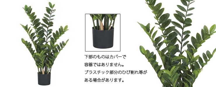 ザミフォリア【メーカー直送・代引き不可】