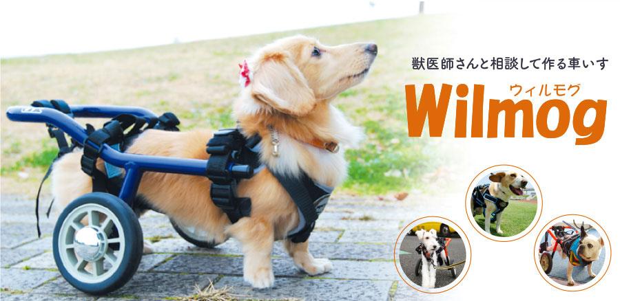 獣医師さんと相談して作る犬用車いす Wilmog(ウィルモグ)