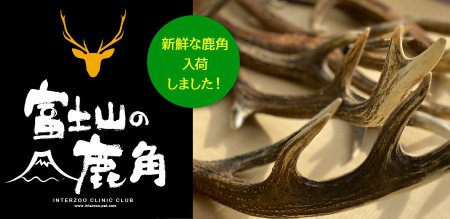 InterZoo ClinicClub 富士山の鹿角