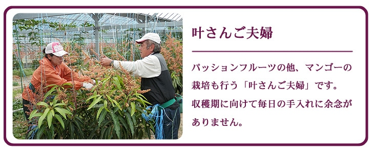 叶さんご夫婦  パッションフルーツの他、マンゴーの栽培も行う「叶さんご夫婦」です。 収穫期に向けて毎日の手入れに余念がありません。