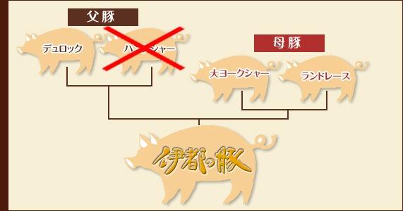 四元交配豚