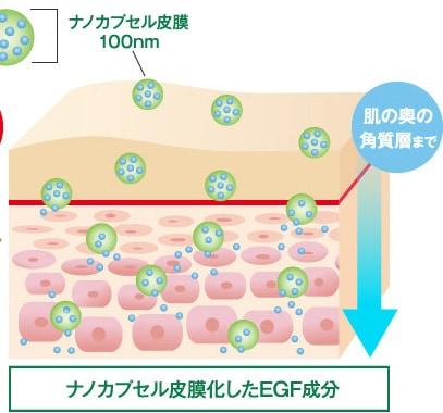ナノカプセル皮膜化したEGF成分