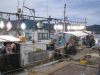 干市の前にはイカ釣り漁船がならんでいます!