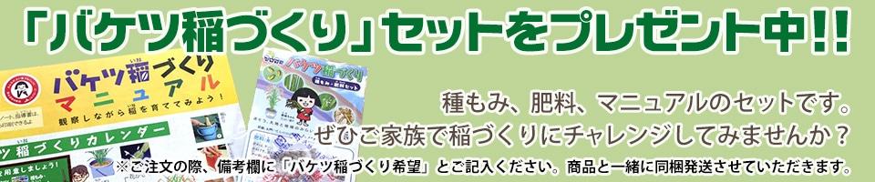 バケツ稲セットプレゼント