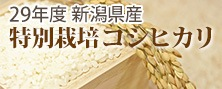 特別栽培コシヒカリ