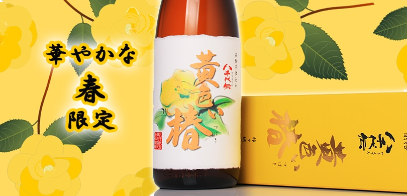 八千代伝 黄色い椿
