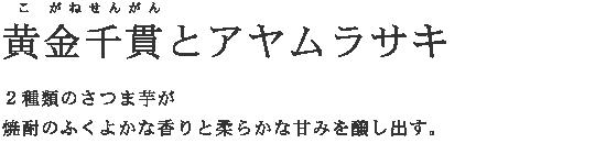 黄金千貫(こがねせんがん)とアヤムラサキ 2種類のサツマイモが焼酎のふくよかな香りと柔らかな甘みを醸し出す。