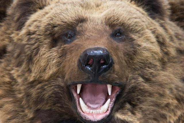 】熊撃退スプレー専用ホルスター