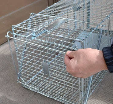 アニマルキャッチャー踏板式M型 猫・ネコ捕獲器