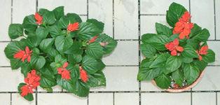 ハイポネックス ハイグレード開花促進 450ml