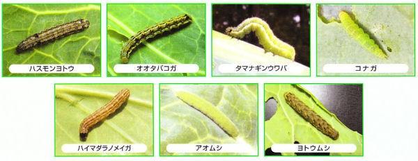 日本農薬株式会社 アクセル フロアブル