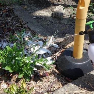 マルハチ産業株式会社 除草剤用 蓄圧式 発泡スプレー ガーデン フォーミー