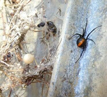 アース製薬株式会社 クモの巣消滅ジェット