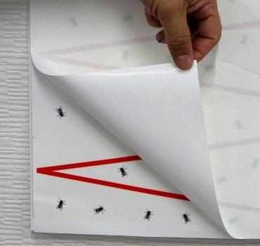 三共消毒株式会社 虫とりカレンダーシート