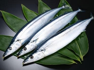 鮮魚通販|サンマ