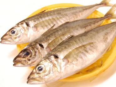 鮮魚通販|真アジ