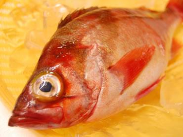 鮮魚通販|メバル