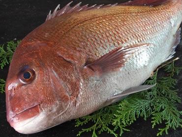 鮮魚通販|真鯛