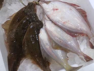 鮮魚通販|カレイ