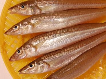 鮮魚通販|キス