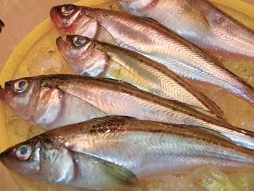 鮮魚通販|ハタハタ
