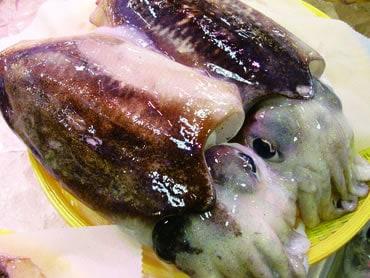 鮮魚通販|コウイカ