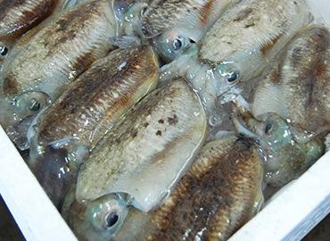 鮮魚通販|こういか