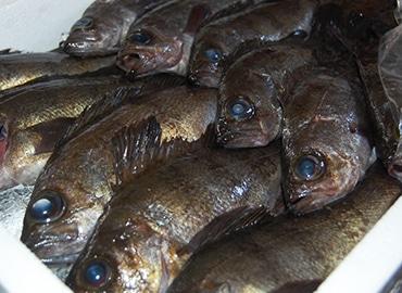 鮮魚通販|クロメバル