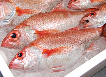 鮮魚通販|ノドグロ